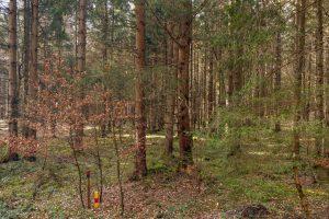 ©TomFaehrmann-7512